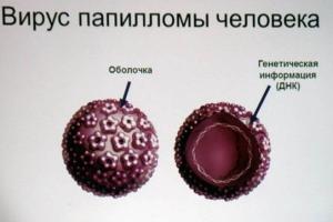 Как можно заразиться вирусом папилломы человека?