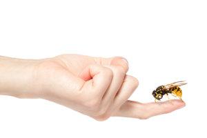 Что делать при крапивнице от укуса насекомых?