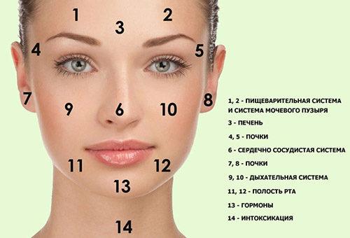 Локализация сыпи на лице у взрослого